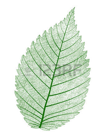 17,282 Macro Leaf Stock Vector Illustration And Royalty Free Macro.