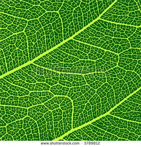 Macro Leaf Stock Vectors & Vector Clip Art.