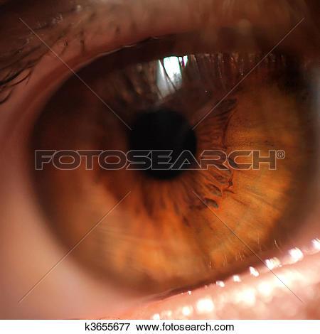 Picture of Eye detail macro k3655677.