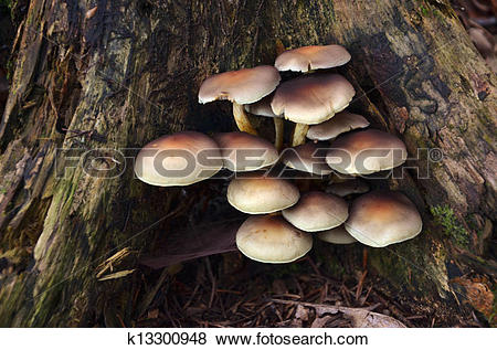 Pictures of Macro photography of mushrooms growed on dead tree.