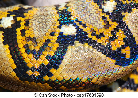 Stock Photographs of boa snake skin and scales pattern macro.