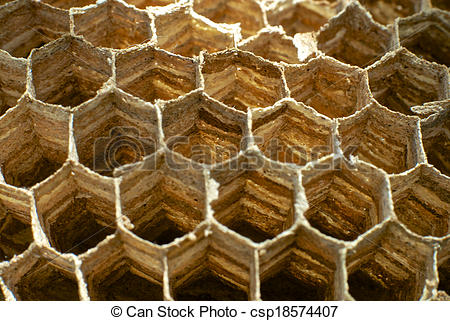 Stock Photography of Macro photograph showing hexagon wasp nest.