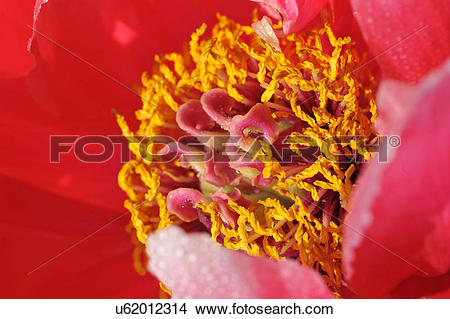 Stock Photo of Macro photography of pink petaled flower with.