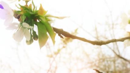 "Search photos ""flower clip art""."