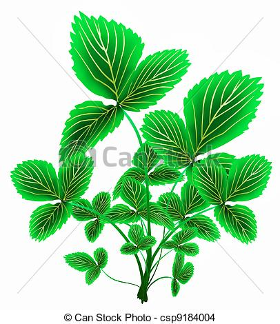 Drawing of Spring leaves of garden strawberry macro.
