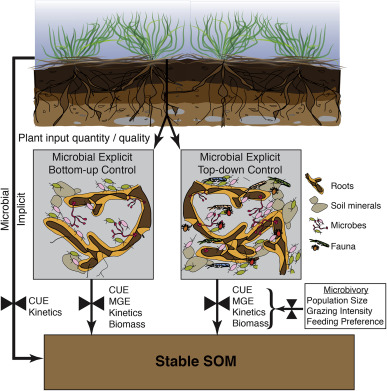 Beyond microbes: Are fauna the next frontier in soil.