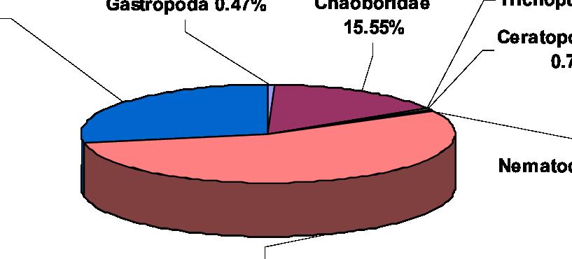 Distribution of benthic macroinvertebrates in Mantovo Reservoir.