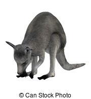 Macropus giganteus Clip Art and Stock Illustrations. 13 Macropus.