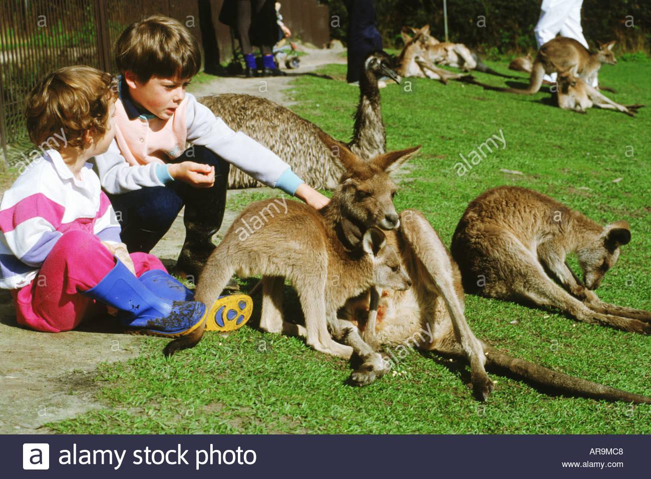 Young Kangaroo Stock Photos & Young Kangaroo Stock Images.