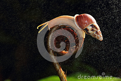Snail On Roll Plant Stock Photo.