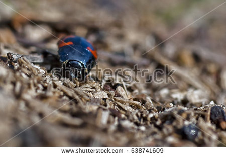 Beatle Insect Stock Photos, Royalty.