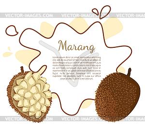 Marang Exotic Juicy Fruit Terap Poster.