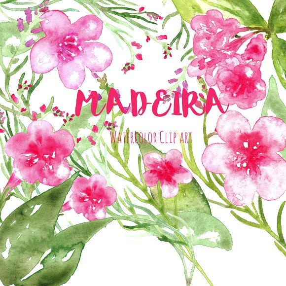 Madeira. Watercolor clip art. ~ Graphics on Creative Market.