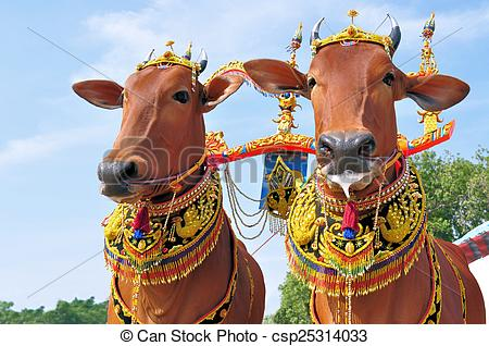 Stock Photos of Decorated Bulls for Madura Bull Race, Indonesia.