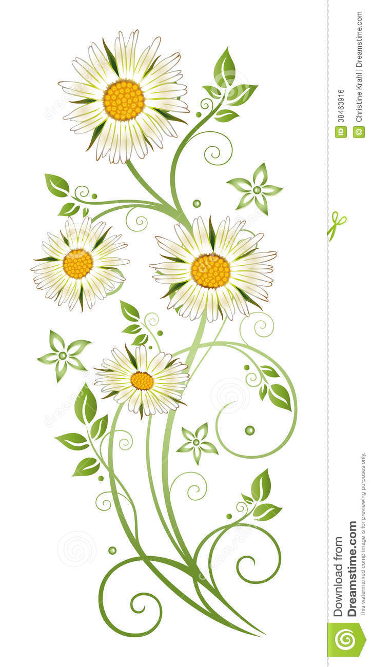 Marguerite Daisy Royalty Free Stock Image.