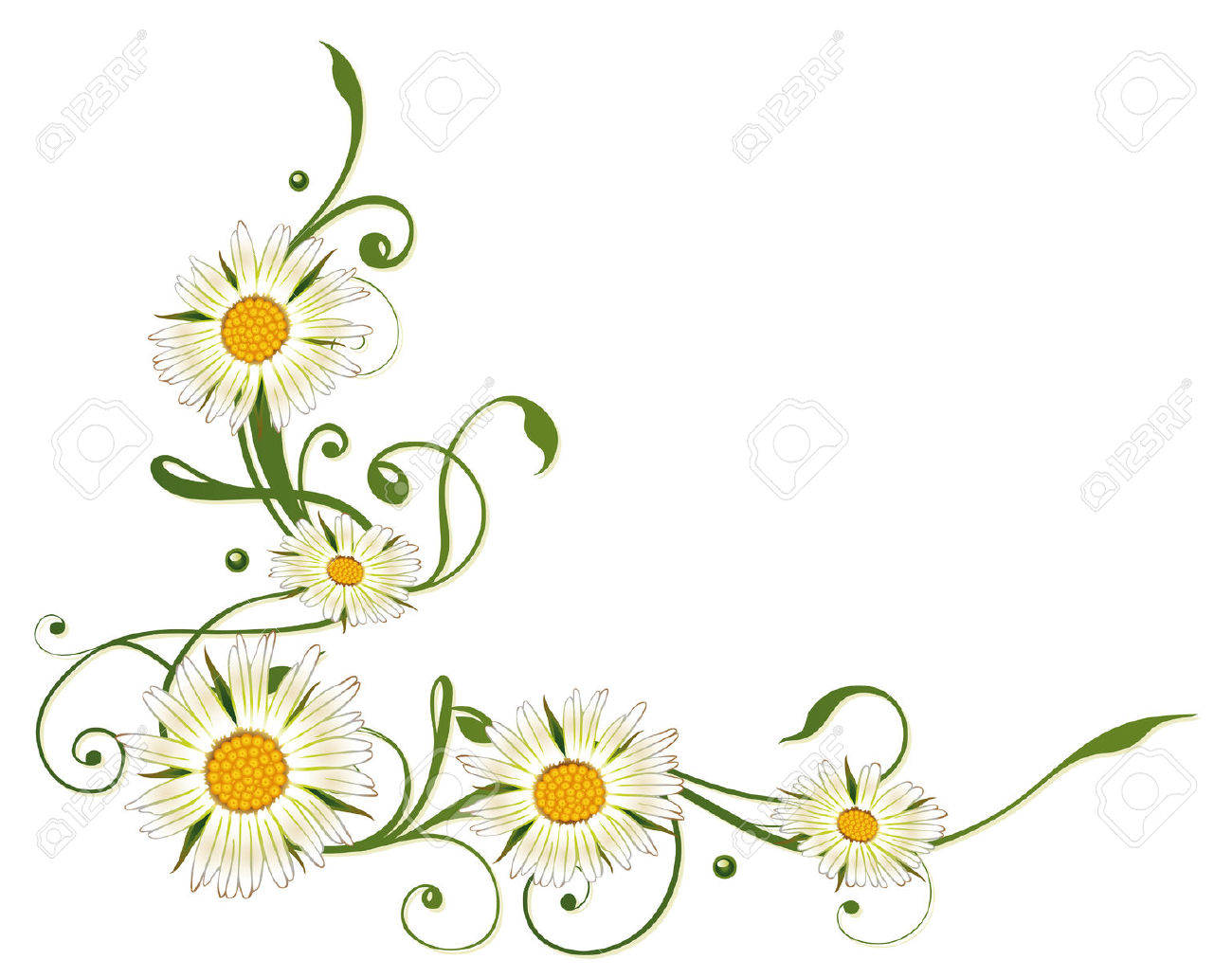Colorful Summer Decoration, Marguerite Daisy Border Royalty Free.