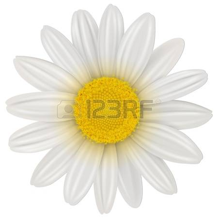 978 Marguerite Stock Vector Illustration And Royalty Free.