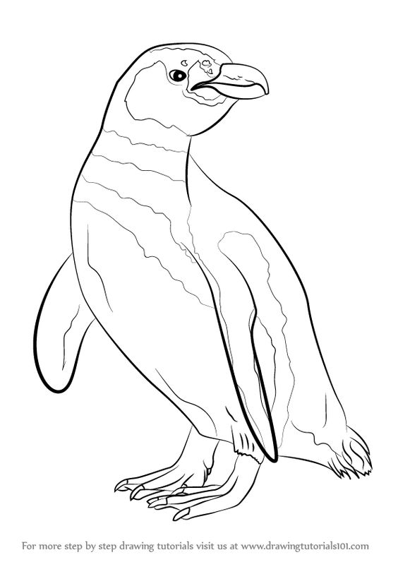 Learn How to Draw a Magellanic Penguin (Antarctic Animals) Step by.