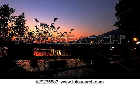 Picture of Plants and sky in magic hour k29235887.
