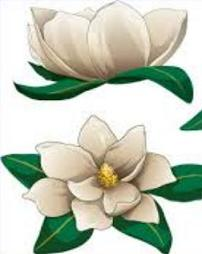 Magnolia Blossom Clipart.