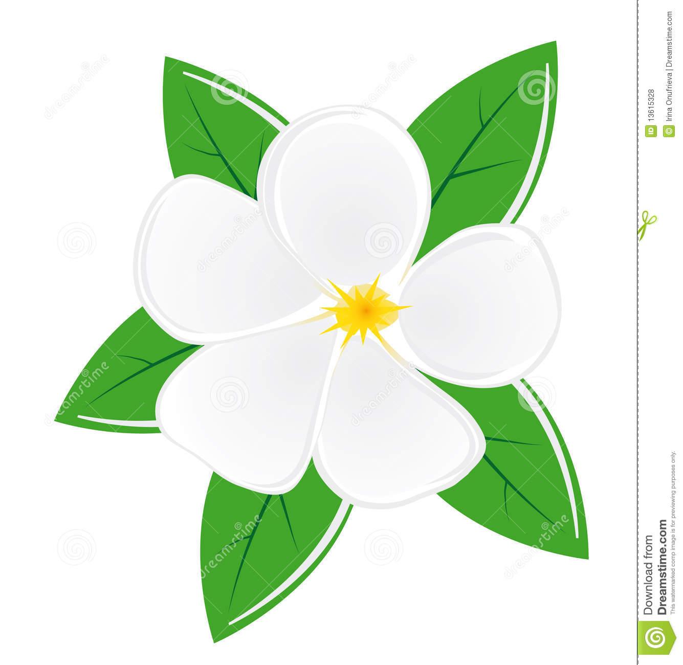 magnolia blossom clip art - photo #8