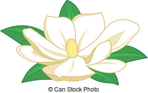 Magnolia Illustrations and Clip Art. 1,466 Magnolia royalty free.