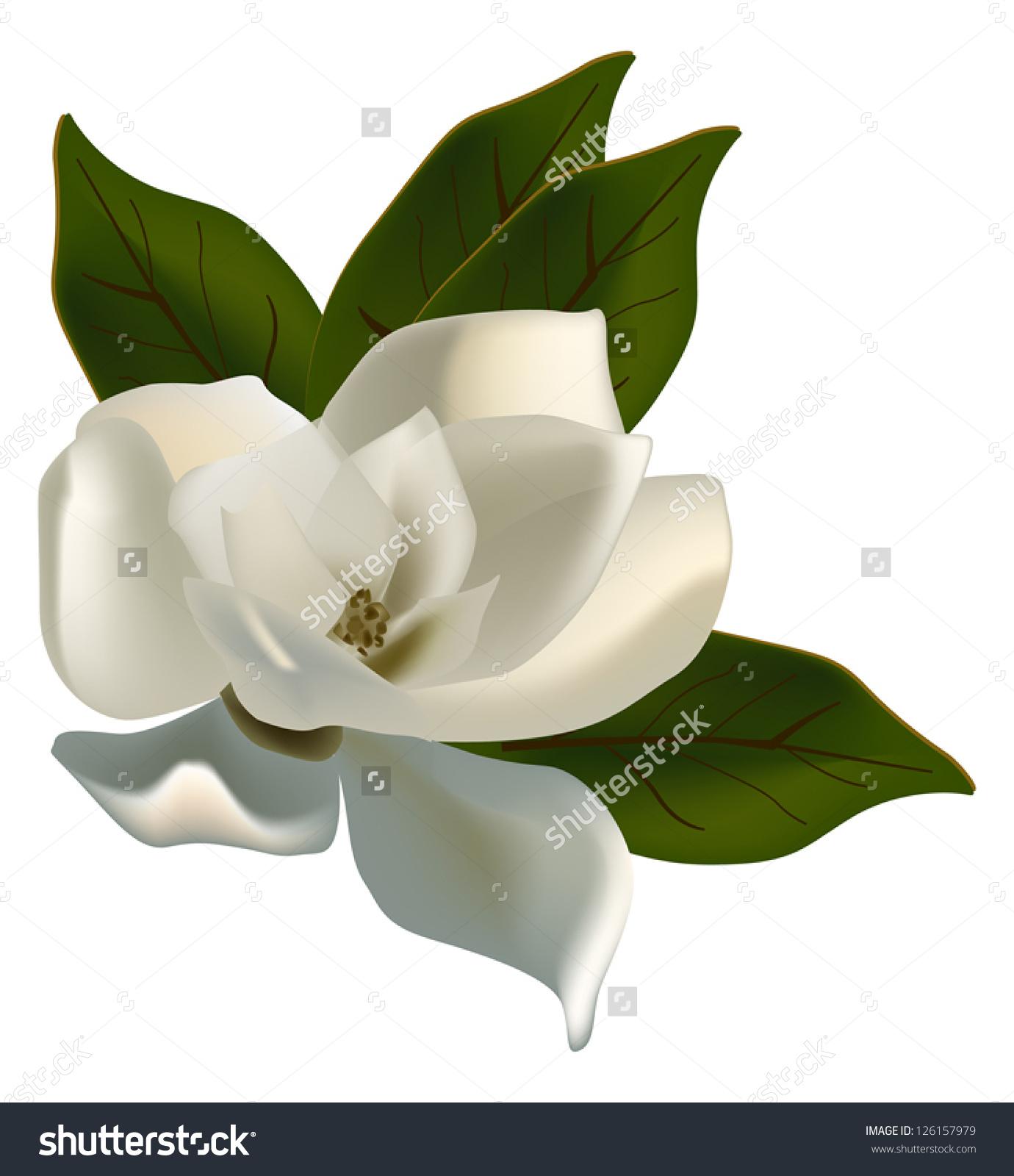 Illustration Single Magnolia Flower Isolated On Stock Vector.