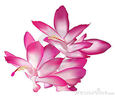 Gallery For > Pink Magnolia Blossom Clipart.