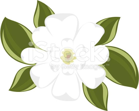 magnolia branch clip art - photo #33