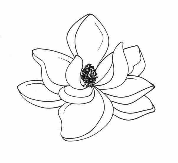 magnolia clipart magnolia blossom #36 in 2019.