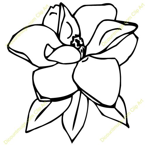 254 Magnolia free clipart.