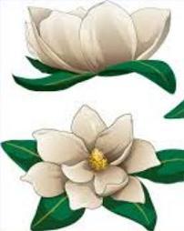 Free Magnolia Cliparts, Download Free Clip Art, Free Clip.