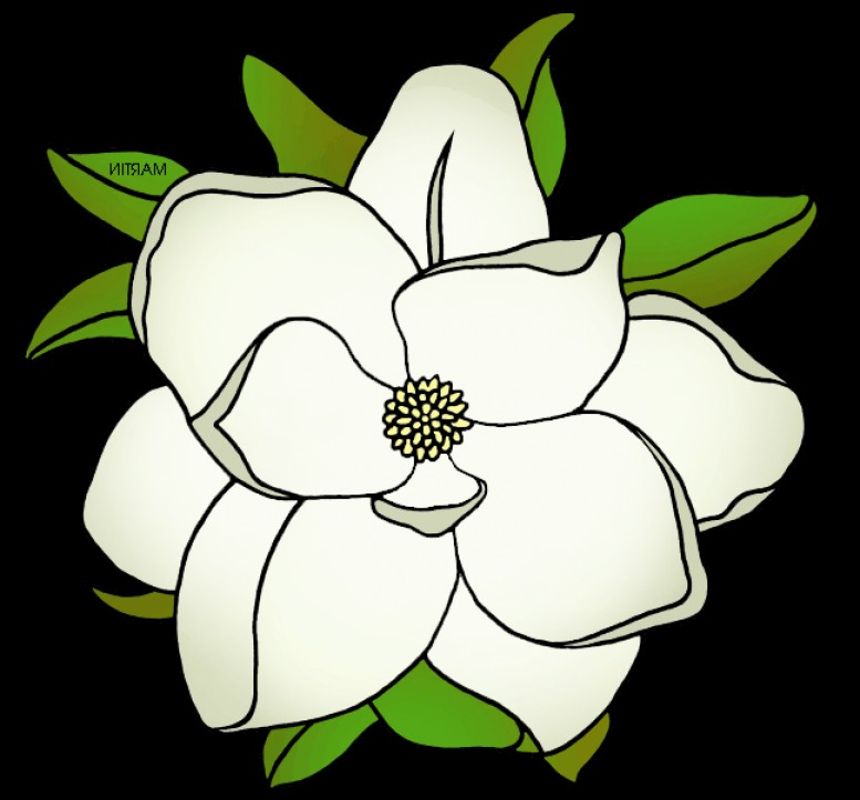 Excellent Southern Magnolia Tree Vector Draw.