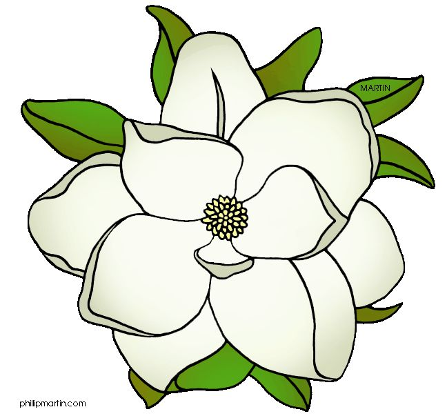 1000+ images about Magnolias on Pinterest.
