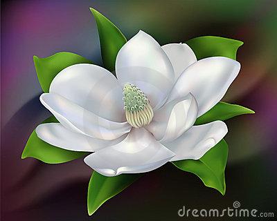 magnolia flower clip art #24.