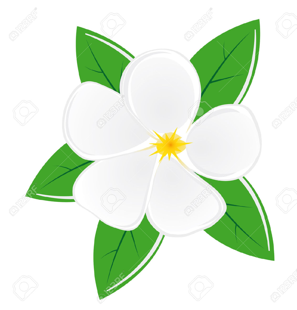 Nature Clipart Green Magnolia Leaves Free.