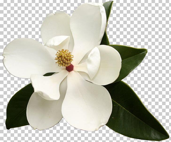 Southern Magnolia Virginia Sweetspire Flower Garden Club.