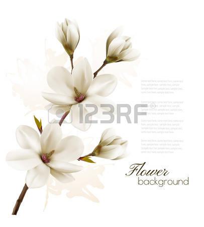 2,733 Magnolia Stock Vector Illustration And Royalty Free Magnolia.