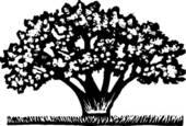 Clipart of magnolia tree rr_so_magnoliatree_c.