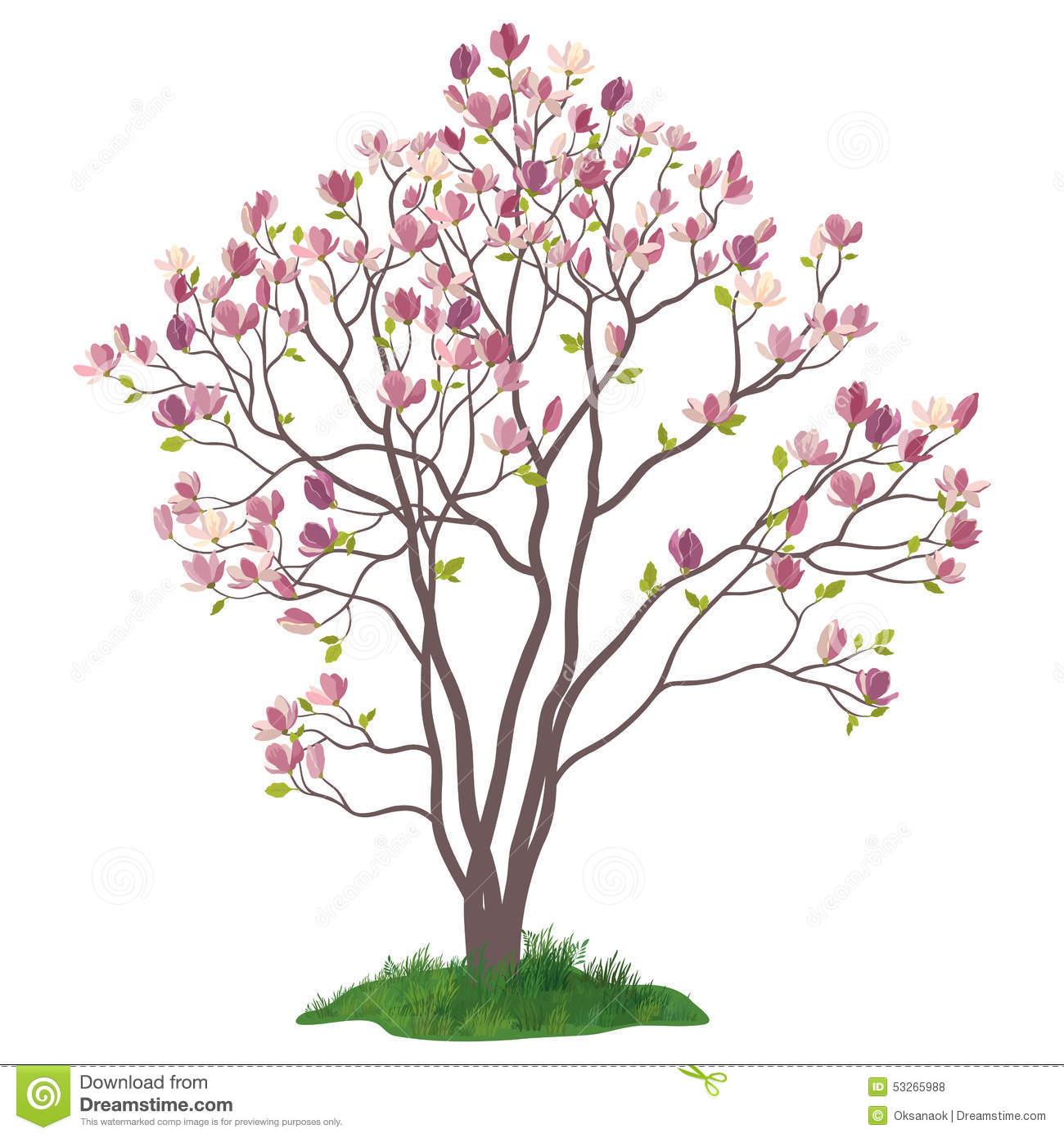 Magnolia Tree Stock Illustrations.