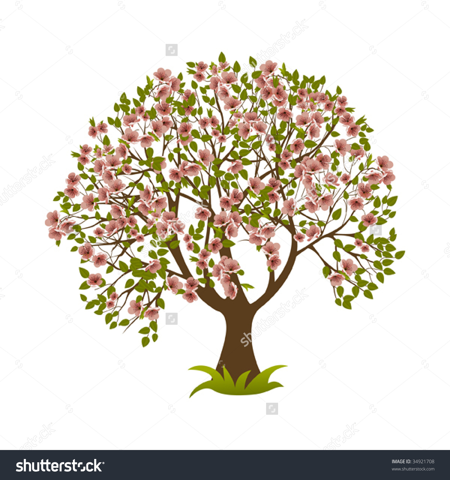 Similiar Magnolia Tree Vector Keywords.
