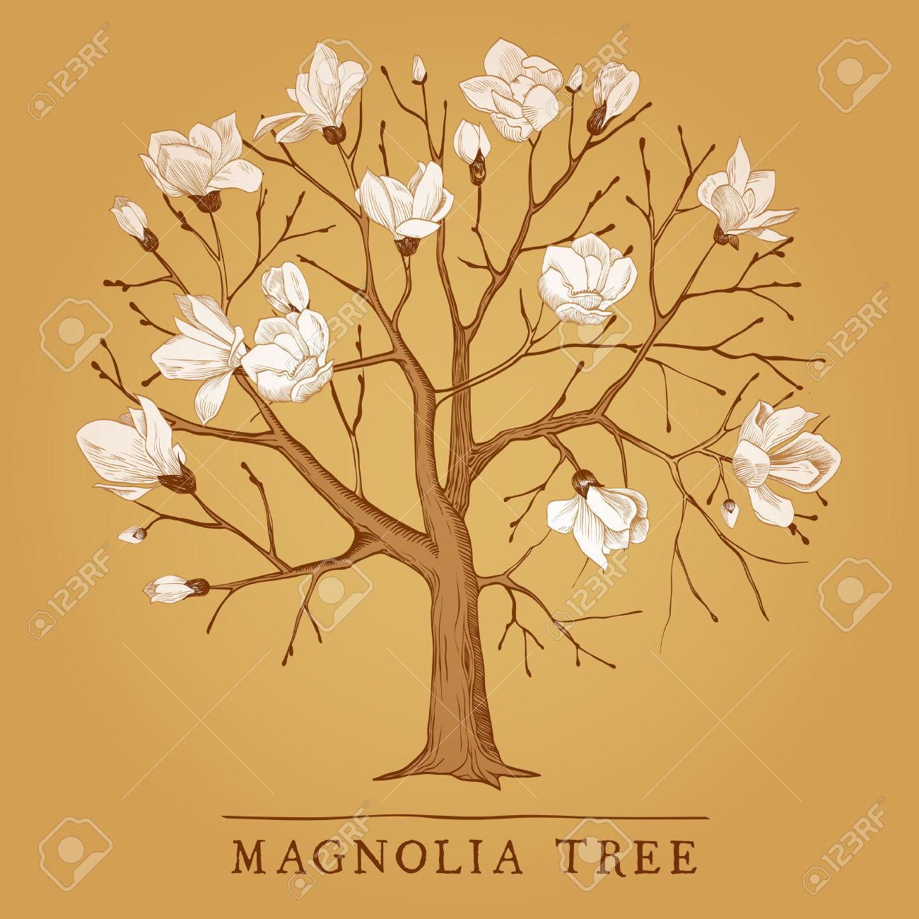 917 Magnolia Tree Cliparts, Stock Vector And Royalty Free Magnolia.