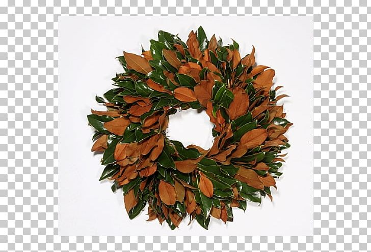 Fruit Tree Magnolia Wreath PNG, Clipart, Berry, Conifer Cone.