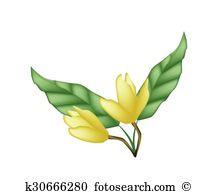 Magnoliaceae Clip Art Vector Graphics. 16 magnoliaceae EPS clipart.