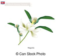 Magnoliaceae Vector Clip Art Royalty Free. 17 Magnoliaceae clipart.