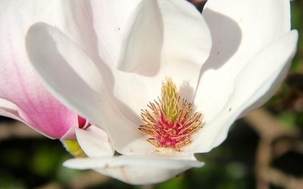 Tulip free stock photos download (675 Free stock photos) for.