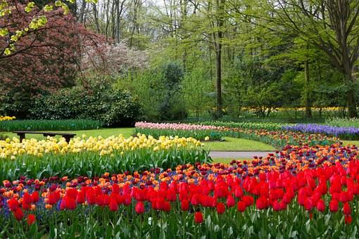 Tulip, Tree.