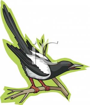 Clipart Picture of a Magpie Bird Perched on a Twig.
