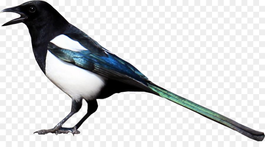 Cartoon Bird png download.