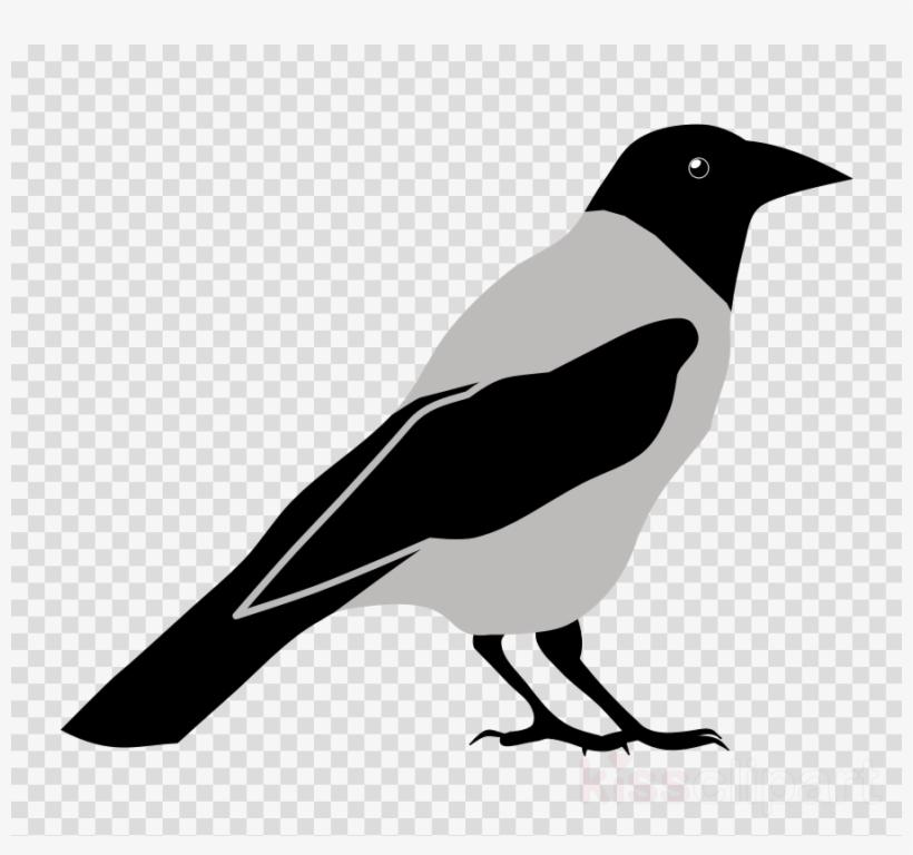 Crow Clipart Eurasian Magpie Clip Art.
